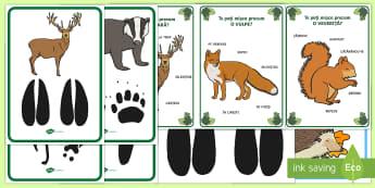 Activitate: Urme în pădure Pachet cu resurse - animale, jocuri de deducție, activități, despre animale, animalele sălbatice, habitatul animalel