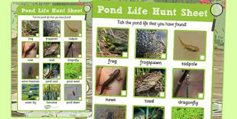 Pond Life Hunt Sheet - pond dipping, pond life, hunt sheet, hunt