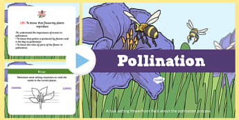 Life Cycle Flower Pollination Task Setter Powerpoint Pack - life cycle, life cycle powerpoint, life cycle lesson plan, lesson plan, life cycle task setter