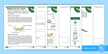 KS1 How to Look After a Lizard Differentiated Comprehension Go Respond Worksheet / Activity Sheets - Pets, pet, EYFS, KS1, take, care, look, after, family, member, members, vet, vet surgery, surgery, i
