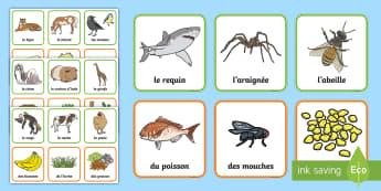 Cartes pour jeu de paires : Les animaux et ce qu'ils mangent - Sciences, vie animale, régime, alimentation, cycle 1, cycle 2, animaux