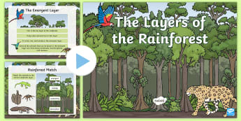 Layers of the Rainforest PowerPoint - powerpoint, rainforest, rainforest layers, rainforest animals, rainforest habitat, habitat, rainfore