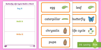 Butterfly Life Cycle Build a Word Activity Sheet - USA Early Childhood Science: Life Cycles, butterfly life cycle, build words, life cycle word cards,