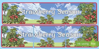 Strawberry Season Display Banner - strawberries, strawberry plants, strawberry farming, strawberry picking, strawberry plant life cycle