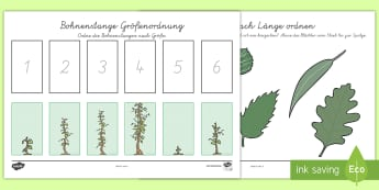 Beanstalk Height and Length Ordering Activity Sheets German - Beanstalk Height and Length Ordering  Activity Sheets, German,German, worksheet, comparison