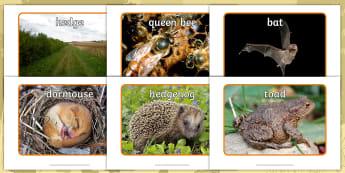Don't Hog the Hedge! Photo Pack - Twinkl Originals, Fiction, Autumn, Hibernate, Woodland, Animals, KS1, EYFS, British wildlife, hibern