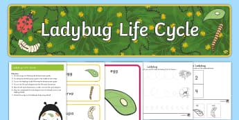 Life Cycle of a Ladybug Early Childhood  Resource Pack - Life Cycles, Ladybugs, Life Cycle of a Ladybug, Ladybug Life Cycles