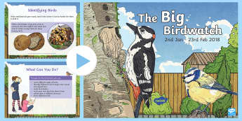 The Big Birdwatch 2018 PowerPoint - Birds, Country, Garden, Field, Watching, Survey,outdoor, nature,Scottish