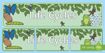 Life Cycles Display Banner - Life Cycles Display Banner - life cycle, banner, editable abnners, editablebanner, austrila, lfe cyc