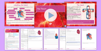AQA  Biology: The Heart Lesson Pack - heart, valves, atrium, ventricle, pump, blood, muscle, oxygenated, de-oxgenated