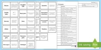 Edexcel Genetics Word Loops - Word Loops, genetics, phenotype, genotype, dominant, recessive, mutations
