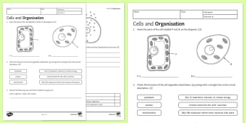 KS3 Cells and Organisation Homework Worksheet / Activity Sheet