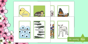 IKEA Tolsby Spring Class Group and Table Signs  - IKEA Tolsby Prompt Frame, table names, cards, autumn, squirrels, animals