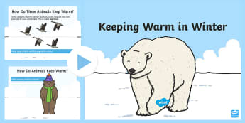 How Animals Keep Warm in the Winter PowerPoint - winter, animals, Powerpoint, warm, habitats, adaptation, cold weather, seasons, snow