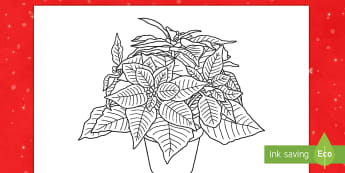 Poinsettia Coloring Worksheet / Activity Sheet - coloring, Christmas, poinsettia, worksheet, december, flowers, plants, winter, mindfulness,