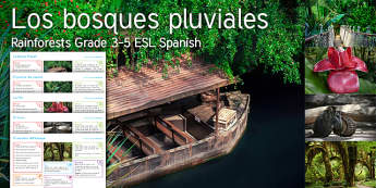 Imagine Rainforests KS2 Resource Pack Spanish (Latin) - river, boat, rope, bridge, flower, monkey, forest, path
