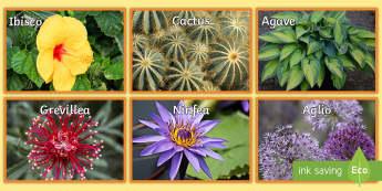 Le piante e i fiori Foto Illustrative - fotografie, piante, natura, flora, italiano, italian, materiale, scolastico