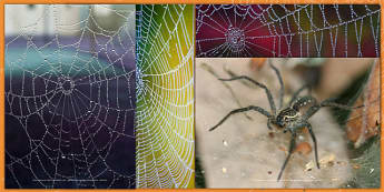 Spiders and Webs Photo Pack - spiders, webs, photo pack, photo, pack