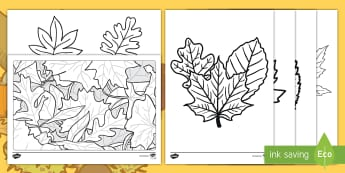 NEW Autumn Leaves Colouring Pages