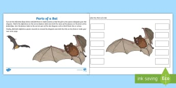 Label the Parts of a Bat Activity  - Home Education Lapbooks, skin membrane, tragus, calcar,