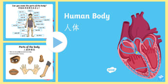 Human Body Information PowerPoint English/Mandarin Chinese - All About Me,Ourselves, My Body, human, skeleton, organs, brain, lungs, heart, breathing, internal o