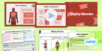 Science: Animals Including Humans: Mighty Muscles Year 3 Lesson Pack 6
