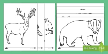 Forest and Woodland Colouring Pages - EYFS, Early Years, Key Stage 1, KS1, Forests, Woodlands, British Wildlife, Autumn, fox, badger, hedg
