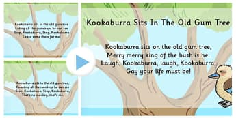 Kookaburra Sits in the Old Gum Tree Song PowerPoint - song, tree
