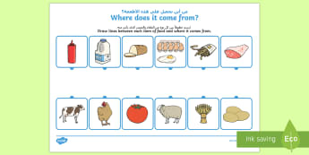 Where Does Food Come from? Activity Sheet Arabic/English - Where Does Food Come From Worksheet - food,work sheet, where does food come from, origin of food, co