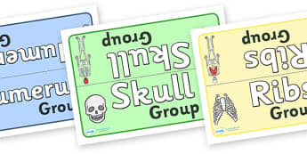 Bones Of The Body Class Group Table Signs - bones of the body class group table signs, bones of the body, bone, bones, class group signs, group signs, group labels, group table signs, table sign, teaching groups, class group, class groups, table labe