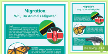Animal Migration Display Poster - ACSSU043, ACSSU094, adapt, adaptation, movement, geese, flying south,Australia