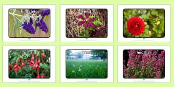 Garden Plants Display Photos - garden, plants, display photos