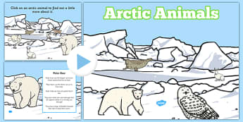 Winter Arctic Animals Habitat PowerPoint - powerpoint, power point, interactive, powerpoint presentation, winter arctic animals, arctic animals, animals, winter animals, winter animals presentation, winter animals powerpoint, arctic animals powerpoin