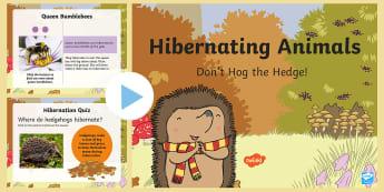 Don't Hog the Hedge! Hibernating Animals PowerPoint - Twinkl Originals, Fiction, Autumn, Hibernate, Woodland, Animals, KS1, EYFS, Hibernation, animals