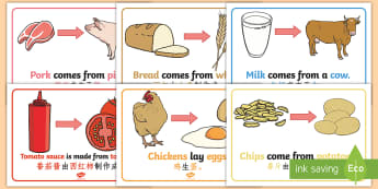Where Does Food Come From Display Posters English/Mandarin Chinese - Where Does Food Come From Display Posters - food, display, posters, where does food come from, origi