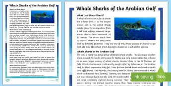 Whale Sharks of the Arabian Gulf Fact File - whale sharks, Arabian Gulf, Arabian Sea, Arabian Marine Animals, Fish