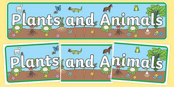 Plants and Animals Display Banner - plants and animals, plants, animals, living things, plants and animals banner, living things banner, life processes