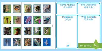 Photo Sea Creatures, Farm Animals, Wild Animals and Minibeasts Sorting Activity English/Mandarin Chinese - Photo Sea Creatures, Farm Animals, Wild Animals and Minibeasts Sorting Activity - sorting, activity,