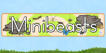 Minibeasts Display Banner - minibeasts, insects, animals, header