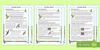KS2 Garden Birds Differentiated Reading Comprehension Activity - KS2 RSPB Big School's Birdwatch (3 Jan-17 Feb 2017), RSPB, school, bird, bird watch, garden birds c