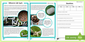 3-6 Life Cycle of a Silkworm Differentiated Reading Comprehension Activity - silkworms, Australia, life cycle, mulberry, mini beasts, reading, comprehension, fact file, factshee