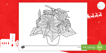 KS1 Poinsettia Colouring Activity Sheet - christmas, flowers, red, tradition, traditional, mexico, mindfulness, relax, worksheet