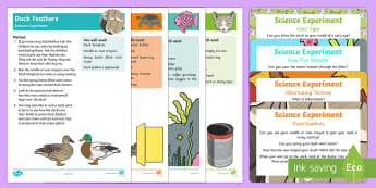EYFS Pets Science Experiments Resource Pack - EYFS Pets, Animals, National Pet Month, animal care, duck, cats, nocturnal, fox, deer, fish, light a