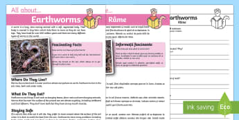 Earthworm Reading Comprehension Pack English/Romanian - Earthworm Reading Comprehension - earthworm, reading, comprehension, comprehesion, comprehnsion, rea