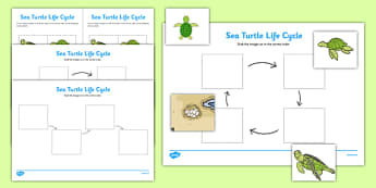 Sea Turtle Life Cycle Worksheets (Under the Sea) -  worksheets, worksheet, sea turtle worksheets, life cycle worksheets, sea turtle, life cycle, under the sea, turtle
