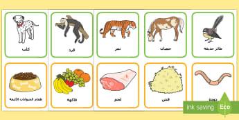 بطاقات مطابقة صور الحيوانات مع صور طعامهم Arabic - حيوانات، مطابقة، بطاقات، لعبة، تواصل، لغة، أنشطة، علم