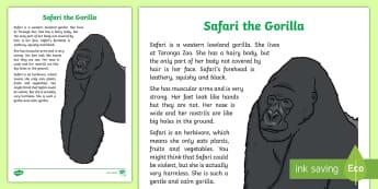 Safari the Gorilla Factual Description Writing Sample - Literacy, Safari the Gorilla Factual Description  Writing Sample  , year 1, year 2, text types, type