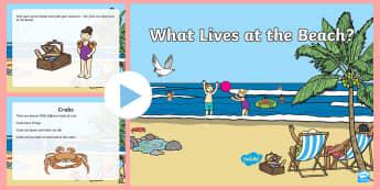 What Lives at the Beach? PowerPoint - Beach, Ocean, Sea, Powerpoint, Beach powerpoint, ocean powerpoint, sea powerpoint, beach habitat, be