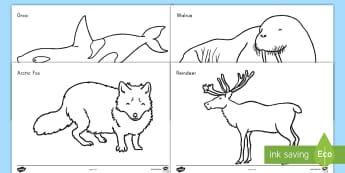 Arctic Animals Coloring Activity Sheets - coloring, animals, winter, arctic, worksheets, nature, habitats, fine motor skills