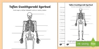 Taflen Gweithgaredd Labeli Sgerbwd - sgerbwd, corff dynol, gwyddoniaeth,Welsh
